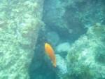 Orange Fish!